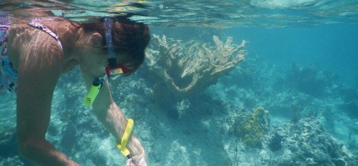 Le voyage plongée en Tanzanie pour vivre des moments uniques